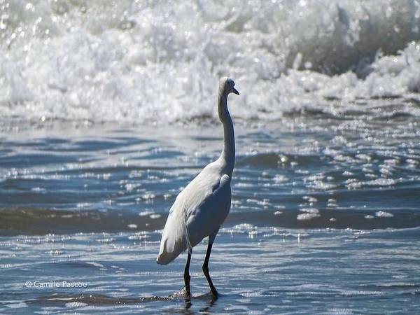 Egret And The Waves Art Print