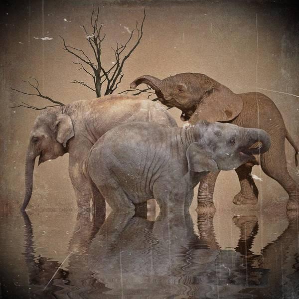 Wall Art - Digital Art - The Old Herd by Sharon Lisa Clarke
