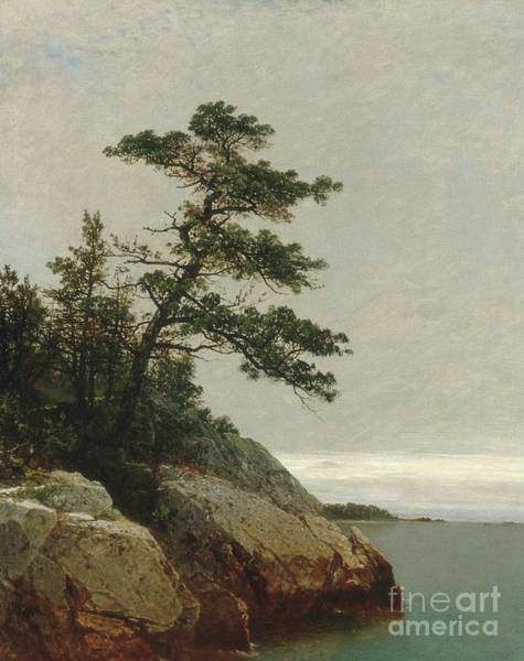 Wall Art - Painting - The Old Pine, Darien, Connecticut, 1872  by John Frederick Kensett