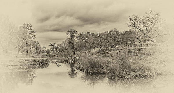 Photograph - The Old Pond by Nick Bywater