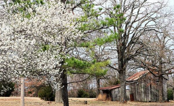 Photograph - The Old Shed In Spring by Sheila Brown
