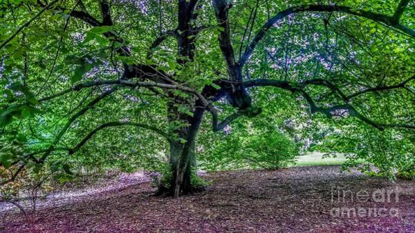 Photograph - The Old Tree At Frelinghuysen Arboretum by Christopher Lotito