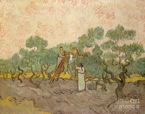 Pickers Wall Art - Painting - The Olive Pickers, Saint-remy, 1889 by Vincent Van Gogh