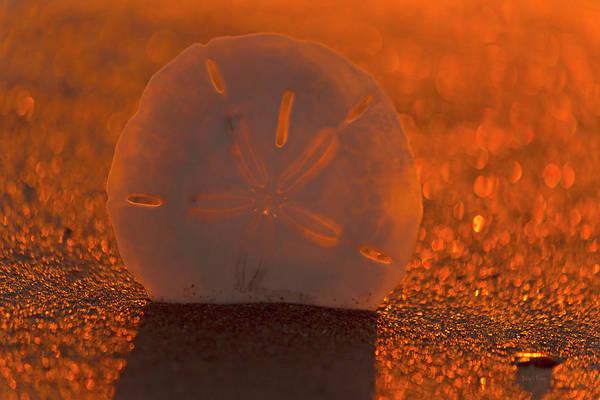 Magic Kingdom Photograph - The One Dollar Sunset by Betsy Knapp