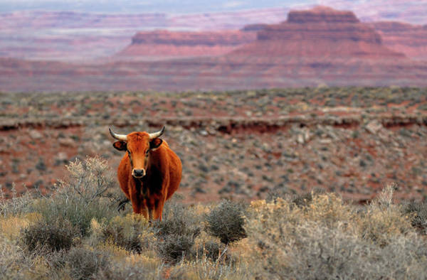 Photograph - The Open Range 2 by Nicholas Blackwell