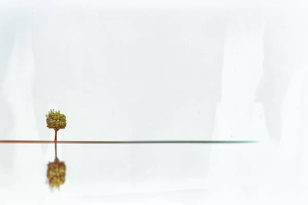 Wall Art - Photograph - The Orange Tree by Rabiri Us