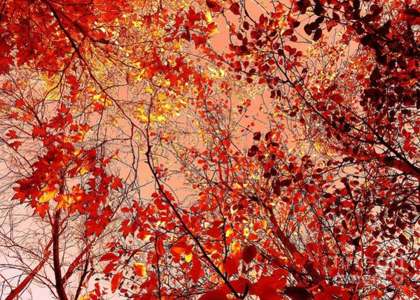 Photograph - Orange Colored Sky by Jenny Revitz Soper