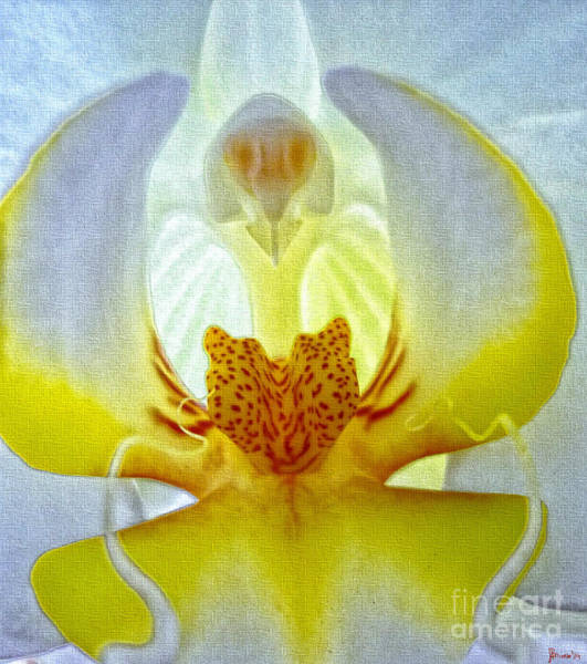 Photograph - The Orchid Angel by Jeff Breiman