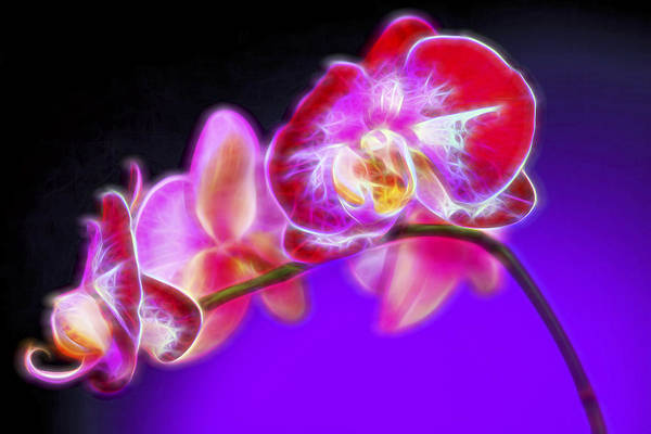 Orchid Digital Art - The Orchid Watches II by Jon Glaser