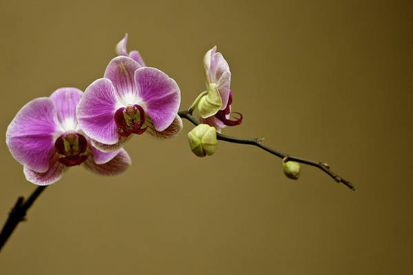 Wall Art - Photograph - The Orchids by Samantha Eisenhauer