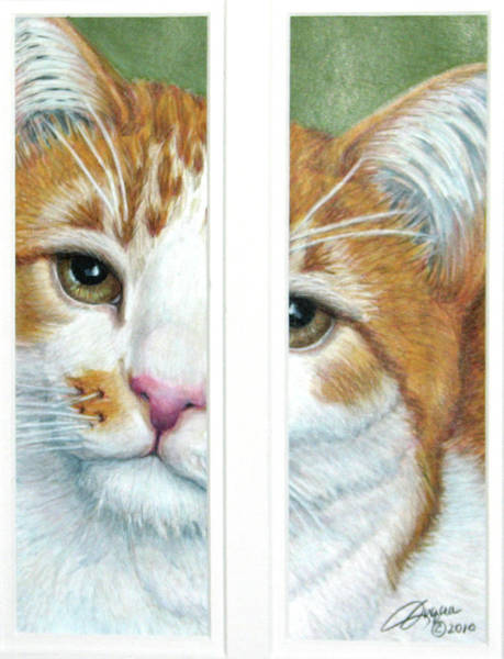 Orange Tabby Drawing - The Otherside by Beverly Fuqua