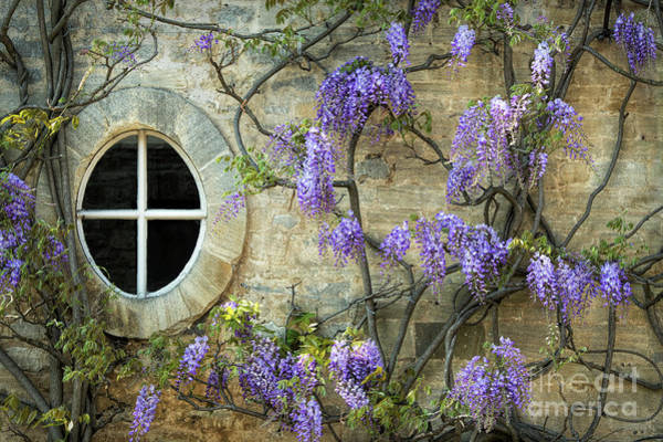 Wisteria Photograph - The Oval Window by Tim Gainey