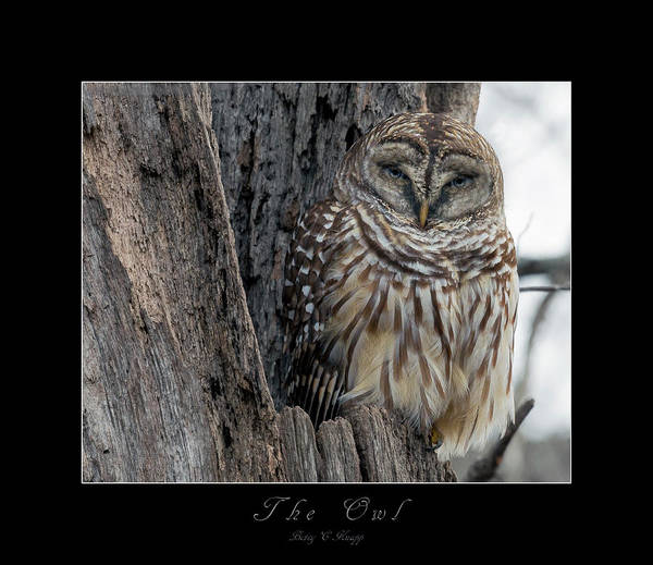 Wall Art - Digital Art - The Owl by Betsy Knapp