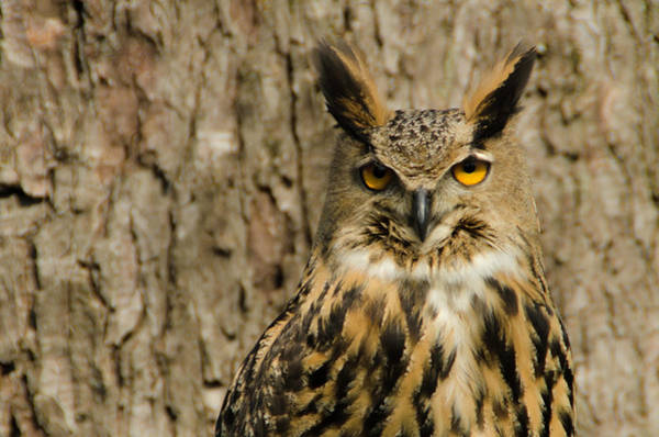 Photograph - The Owl by Wolfgang Stocker