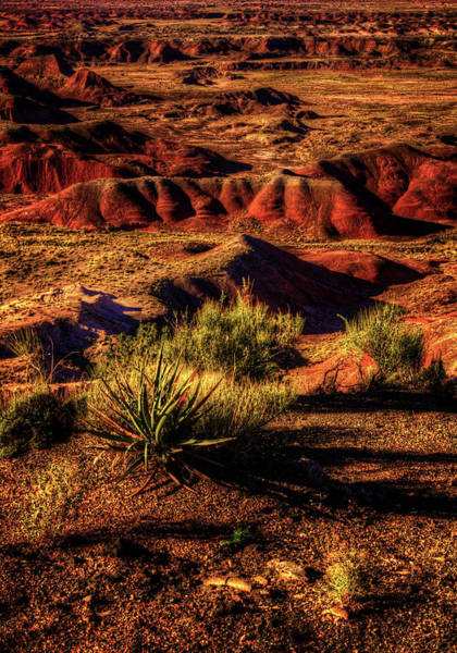Photograph - The Painted Desert From Kachina Point by Roger Passman