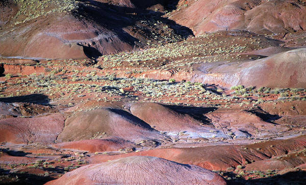 Photograph - The Painted Desert by Tam Ryan