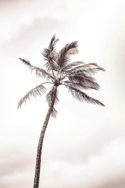 Photograph - The Palm by Mercedes Noriega