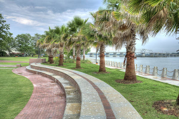 The Palms Of Water Front Park Art Print