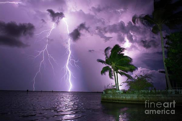 Bolts Photograph - The Palms by Quinn Sedam
