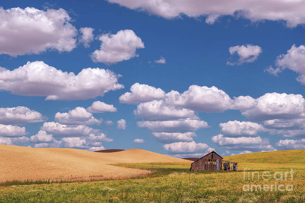 Photograph - The Palouse by Sharon Seaward