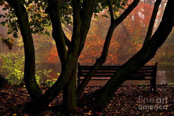 Photograph - The Park Bench by Martyn Arnold