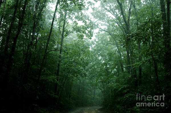 Clayton Photograph - The Path Ahead by Clayton Bruster
