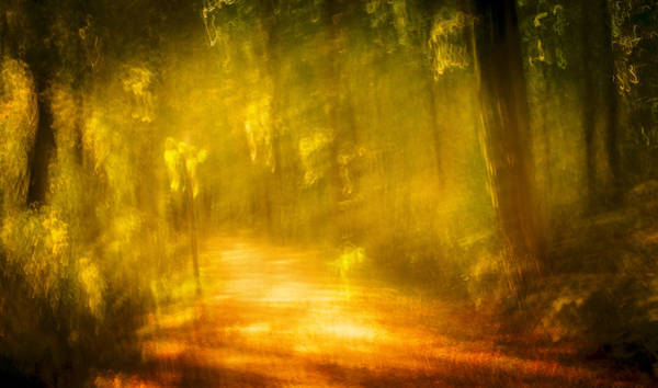 Photograph - The Path by Andy Bitterer