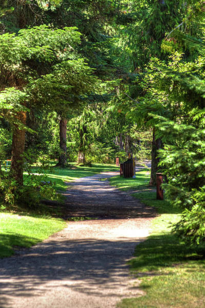 Photograph - The Path At Luby Bay by David Patterson