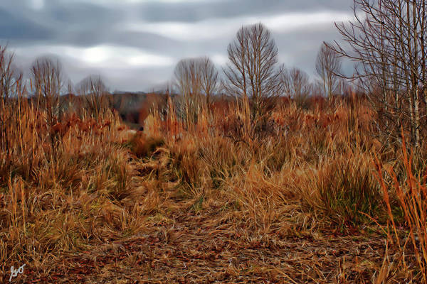 Photograph - The Path by Gina O'Brien