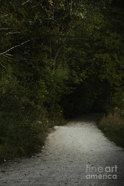 Wall Art - Photograph - The Path In The Darkness by Margie Hurwich