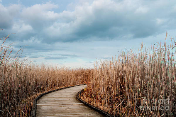 Photograph - The Path by Janal Koenig