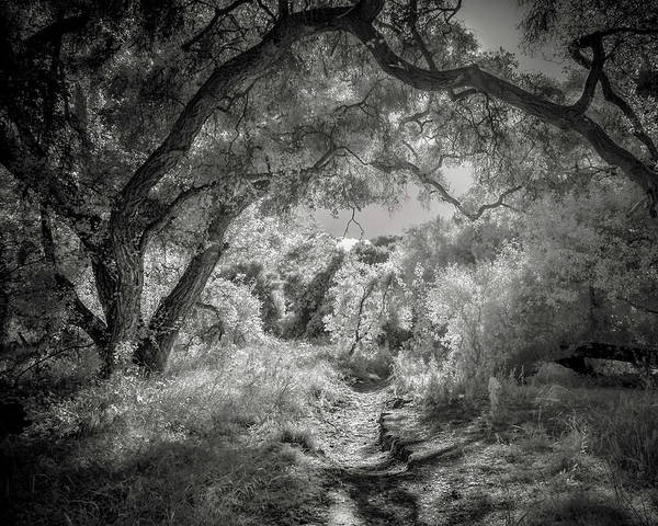 Ir Photograph - The Path by Joseph Smith