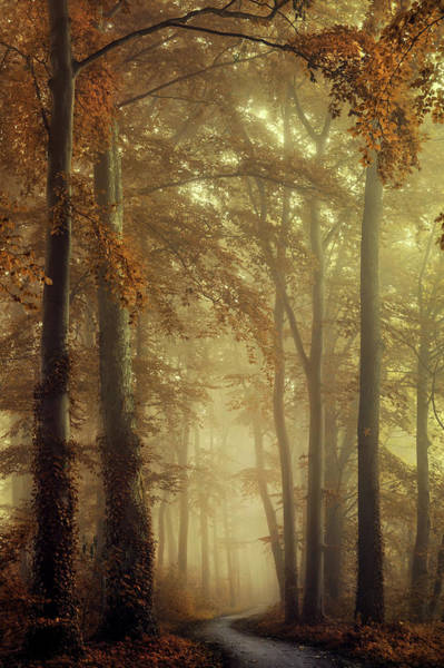Wall Art - Photograph - The Path Of Liberation by Martin Podt