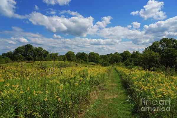 Photograph - The Path Taken by Rachel Cohen