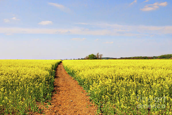 Canola Wall Art - Photograph - The Path To Bosworth Field by John Edwards