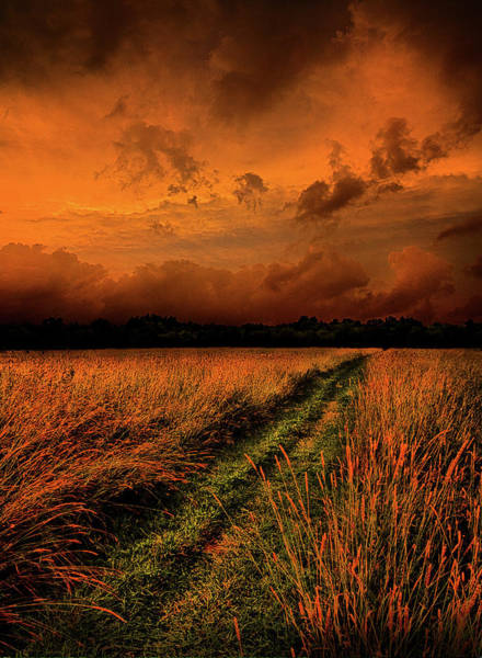 Natur Wall Art - Photograph - The Path To Reclusivity by Phil Koch