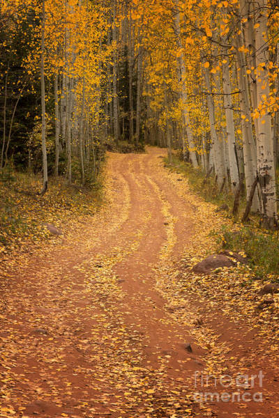 Wall Art - Photograph - The Pathway To Fall by Ronda Kimbrow