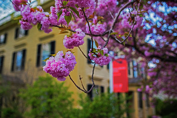 Photograph - The Peabody Essex Museum At Spring Salem Ma by Toby McGuire