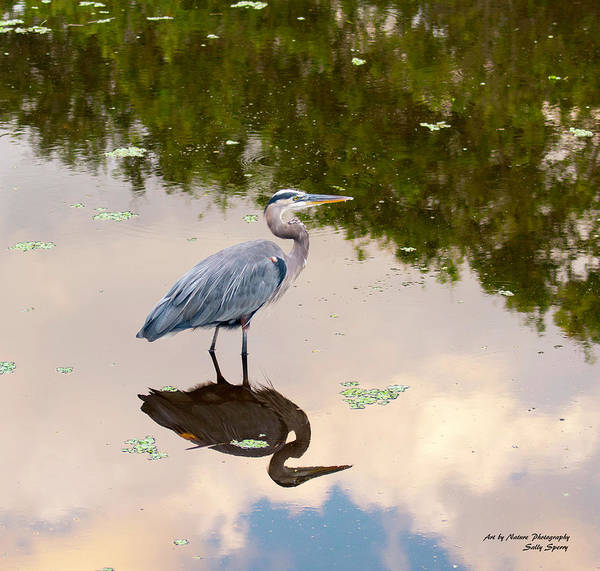 Photograph - The Peace And Quiet Of Day's End by Sally Sperry