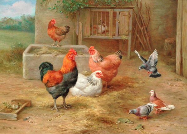 Breeding Painting - The Pecking Order by Edgar Hunt