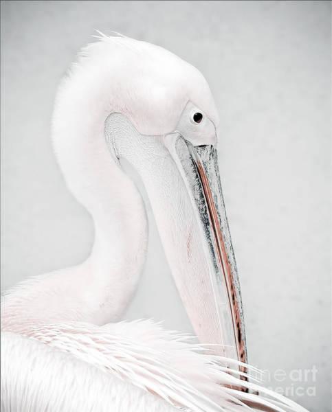 White Pelican Photograph - The Pelican by Jacky Gerritsen
