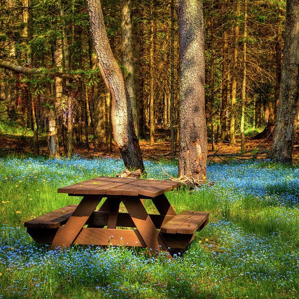 Photograph - The Perfect Picnic Spot by David Patterson