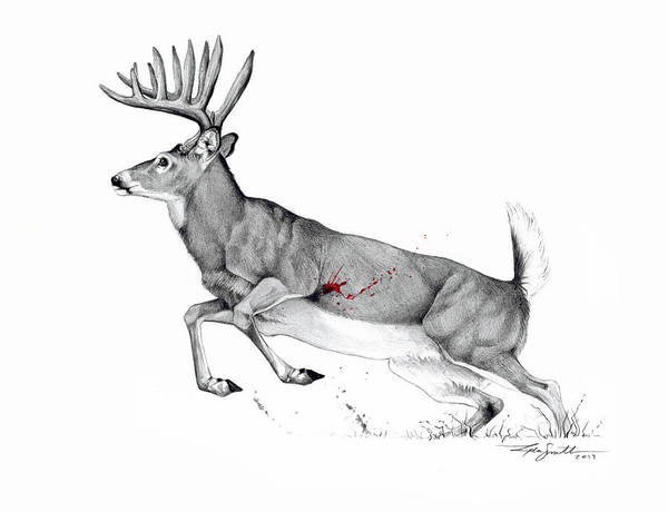 White Tailed Deer Drawing - The Perfect Shot by Lydia Smith