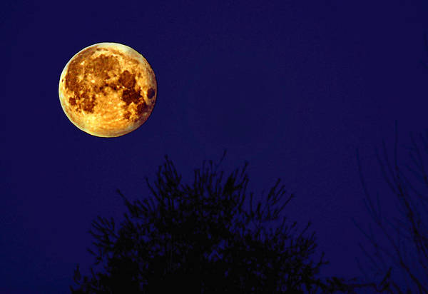 Perigee Moon Photograph - The Perigee Moon by Kevin Hertle
