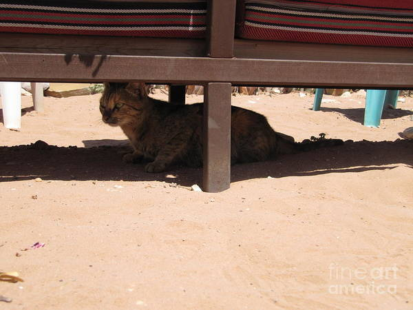 Photograph - The Petra Monastery Cat by Donna L Munro