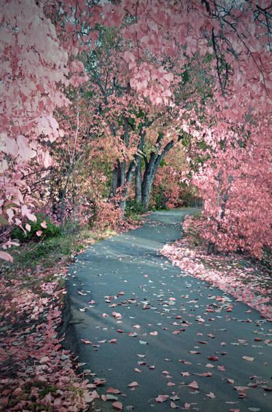 Photograph - The Pink Corridor by Tara Turner