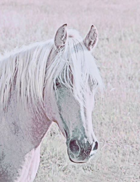 Wall Art - Photograph - The Pink Horse by Jennie Marie Schell