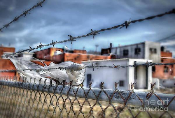 Fence Post Digital Art - The Plant by Dan Stone