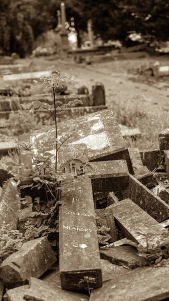 Photograph - The Plant Grows In The Cemetery Cross Grave by Jacek Wojnarowski