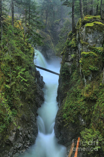 Photograph - The Plunge by Adam Jewell